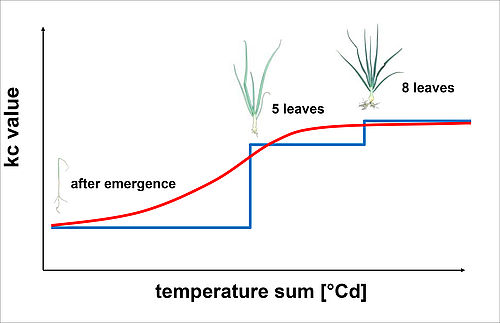 Fig. 1: Schematic representation of the previous kc step function and the new kc temperature sum model for onion