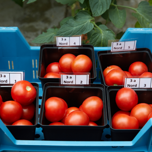 [Translate to English:] Logistik Tomaten