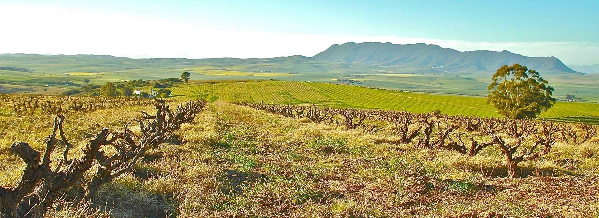 Erfahrungsbericht Auslandssemester Südafrika – Teil 1: Weinbau in ...